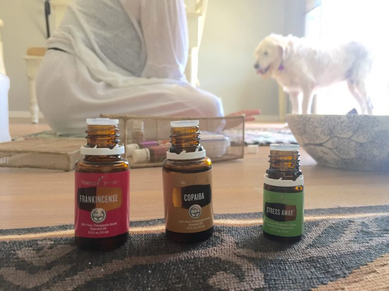 Integrative health for dogs