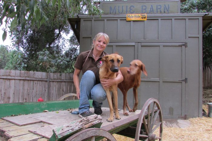 Longtime Pets In Paradise staff member Molly Hager.