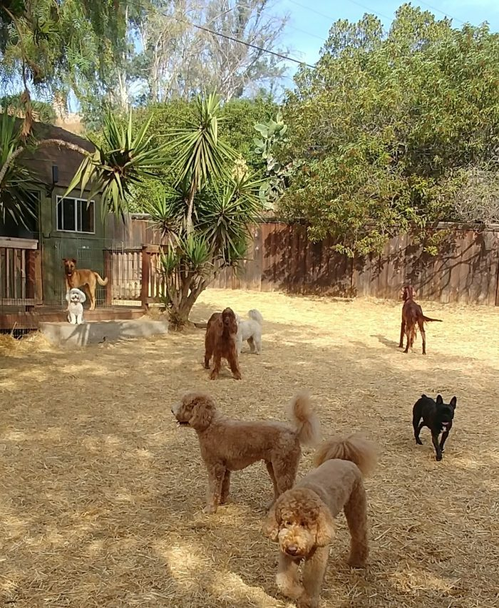 One of three play areas at Pets In Paradise Ranch Resort.